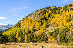 Colorful Fall landscape in the Valley of Estanyo River, Andorra Stock Photo