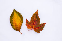 Colorful Fall Leaf Patterns Royalty Free Stock Image