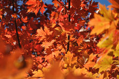 Colorful Fall Leaves Stock Photo