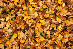 Colorful Fall Leaves Royalty Free Stock Photos