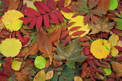 Colorful fall leaves. On the ground Royalty Free Stock Photography