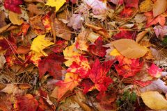 Free Colorful Fall Leaves Stock Photography - 3550132