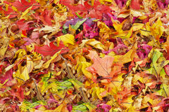 Colorful Fall Leaves Background Stock Images