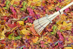 Colorful Fall Leaves Background Royalty Free Stock Photos
