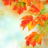 Colorful fall leaves background. Shallow focus. Colorful fall autumn leaves on blurred background with copyspace. Shallow DOF Stock Photo