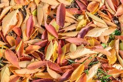 Colorful Fall leaves captured on ground, natures abstract. Taken in Kentucky Stock Images
