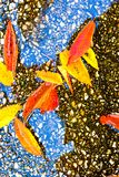 Colorful Fall leaves captured on ground, natures abstract. Taken in Kentucky Royalty Free Stock Image