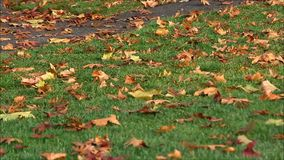 Fall leaves on damp grass. Colorful fall leaves on green grass