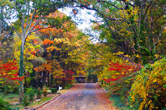 Colorful Fall Leaves Line Road Up A Hill Stock Image