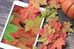 Fall leaves with tablet. Colorful fall leaves with pumpkin and tablet with leaf wallpaper stock images