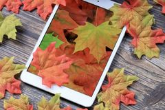 Fall leaves with tablet. Colorful fall leaves with pumpkin and tablet with leaf wallpaper royalty free stock photography