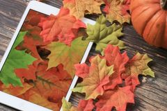 Fall leaves with tablet. Colorful fall leaves with pumpkin and tablet with leaf wallpaper royalty free stock photo