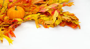 Colorful fall leaves and pumpkins. For decoration on white Royalty Free Stock Image