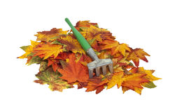 Colorful fall Leaves with Rake Stock Photo