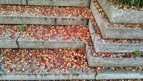 Colorful autumn leaves pile on steps Stock Photography