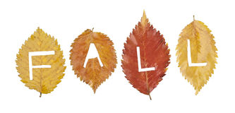 Colorful fall leaves on white background.  Stock Images