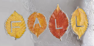 Colorful fall leaves on white background.  Stock Photos