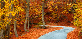 Colorful fall path Stock Photos