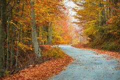 Colorful fall path Stock Photo