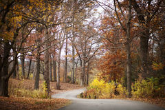 Colorful fall paved path through woods. Stock Photography
