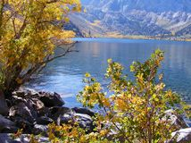 COLORFUL FALL PLANTS AT LAKESIDE IN MAMMOTH MOUNTAIN AREA Royalty Free Stock Photography