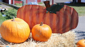 Colorful Fall pumpkins Stock Images