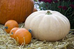 Colorful fall pumpkins Royalty Free Stock Image