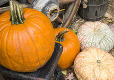 Colorful fall pumpkins Stock Photo