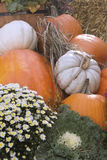 Colorful fall pumpkins and flowers Stock Image