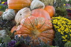 Colorful fall pumpkins and flowers Stock Photos
