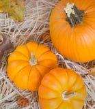 Colorful Fall Pumpkins Stock Image
