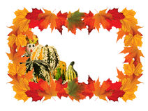 Colorful Fall Scene Frame with a variety of Pumpkins Royalty Free Stock Photos