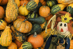 Colorful Fall Scene with a variety of Pumpkins Royalty Free Stock Images