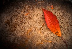 Leaf on rusty metallic background Royalty Free Stock Photography
