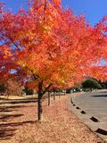 Sonoma fall. The colorful fall of the Sonoma County,California Royalty Free Stock Images
