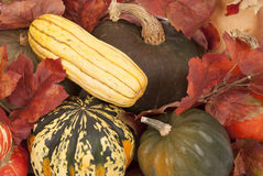 Colorful fall squash harvest yellows, greens, and oranges Stock Photography