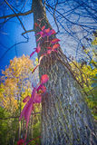 Colorful fall tree Stock Images