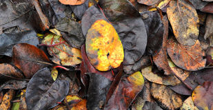 Colorful fallen autumn leaves lying on the ground Stock Images