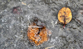 Colorful fallen autumn leaves lying on the ground Stock Photos