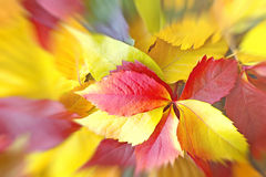 Colorful fallen leaves Royalty Free Stock Photography
