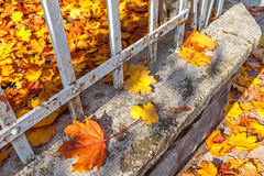 Colorful fallen leaves on the fence. Royalty Free Stock Images