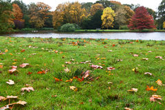 Colorful fallen leaves in grass Royalty Free Stock Photo