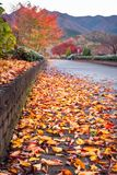 Colorful Fallen leaves on a path in Fujikawaguchiko, Japan. Low angle view on a park path in the morning after rain, with fallen autumn leaves in the foreground stock photo