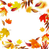 Colorful falling autumn leaves , fall frame, isolated on white background Royalty Free Stock Images