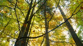 Autumn leaves wood forest move nature stock video footage