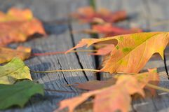 Autumn foliage on wooden surface. A close up of colorful autumn foliage on a wooden surface stock photography