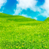 Colorful fantasy meadow Royalty Free Stock Image