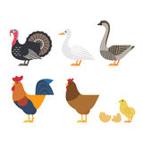 Colorful farm bird icons. Vector set of Colorful farm bird icons stock illustration