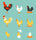 Colorful farm birds collection. A colorful farm birds collection. Vector Illustration of Rooster, Hen, Chick and Eggs vector illustration