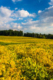 Colorful farm fields near Spring Grove, Pennsylvania. Royalty Free Stock Photo